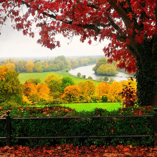 Richmond-Park-London-UK
