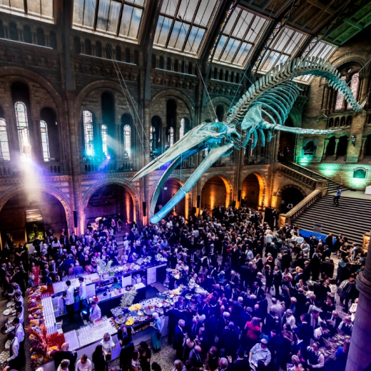 Natural History Museum, hope the whale, drinks reception, events, whale, skeleton, bar, suspended